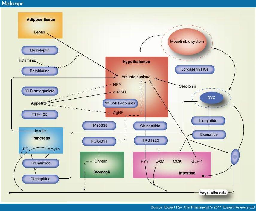 Intrincado sistema hormonal de regulação do apetite